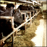 tb-newline-cattle-managers